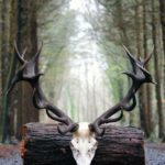Deer Management during Covid-19 and Deer Permit Update