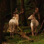 National wild deer cull up as the number of hunters continues to increase