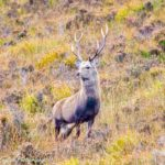 Best practice guides launched to support landowners and deer managers