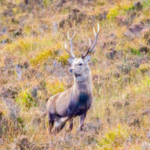 RTE Prime Time – As deer and seal numbers surge, is culling the answer? Read our response