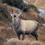 Deer Management Plan for Glenveagh National Park, Co Donegal