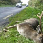 Successful Online Humane Deer Dispatch Course Held