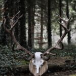 Update! Applications for Deer Hunting Licences for the 2021/2022 Season
