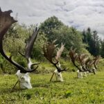 Register now! Deer Management Online Event