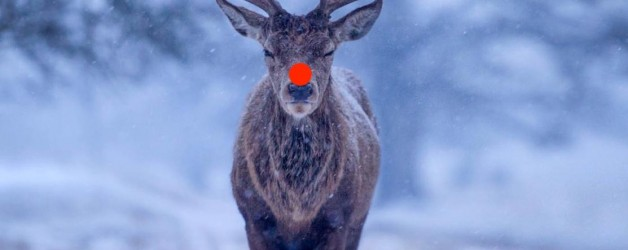 Merry Christmas to all our members and supporters from the Officers and Committee of the Irish Deer Commission