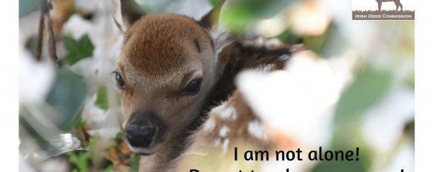 As the birth season for wild deer gets underway, advice for the general-public and farmers