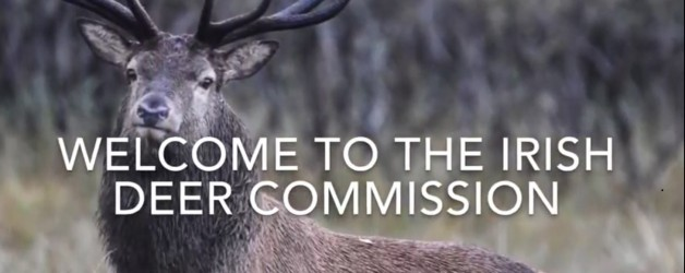 (Watch our new video!) – The Irish Deer Commission – a leading Deer Organisation