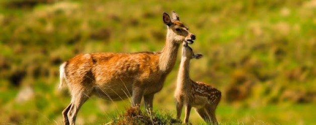 Free Member Online Event – TB and Wild Deer
